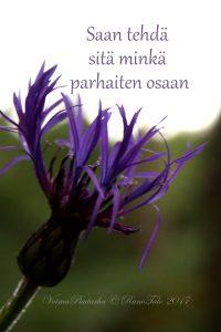 Teen sitä minkä parhaiten osaan, vuorikaunokki voimakortti, runotalo.fi