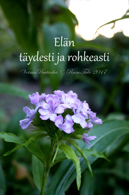 Elän täydesti ja rohkeasti, harjaneilikka voimakorti, runotalo.fi