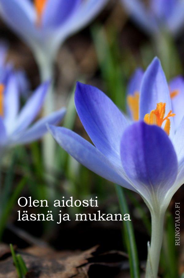 Olen aidosti läsnä ja mukana, sahrami voimakortit, runotalo.fi