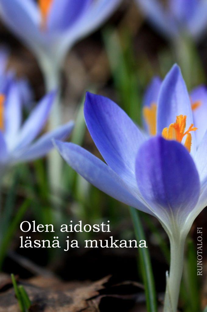 Olen aidosti läsnä ja mukana, sahrami voimakortti, runotalo.fi