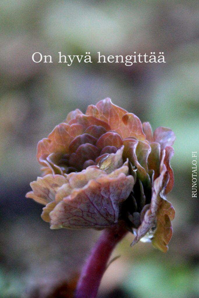 On hyvä hengittää, akileija voimakortti, runotalo.fi
