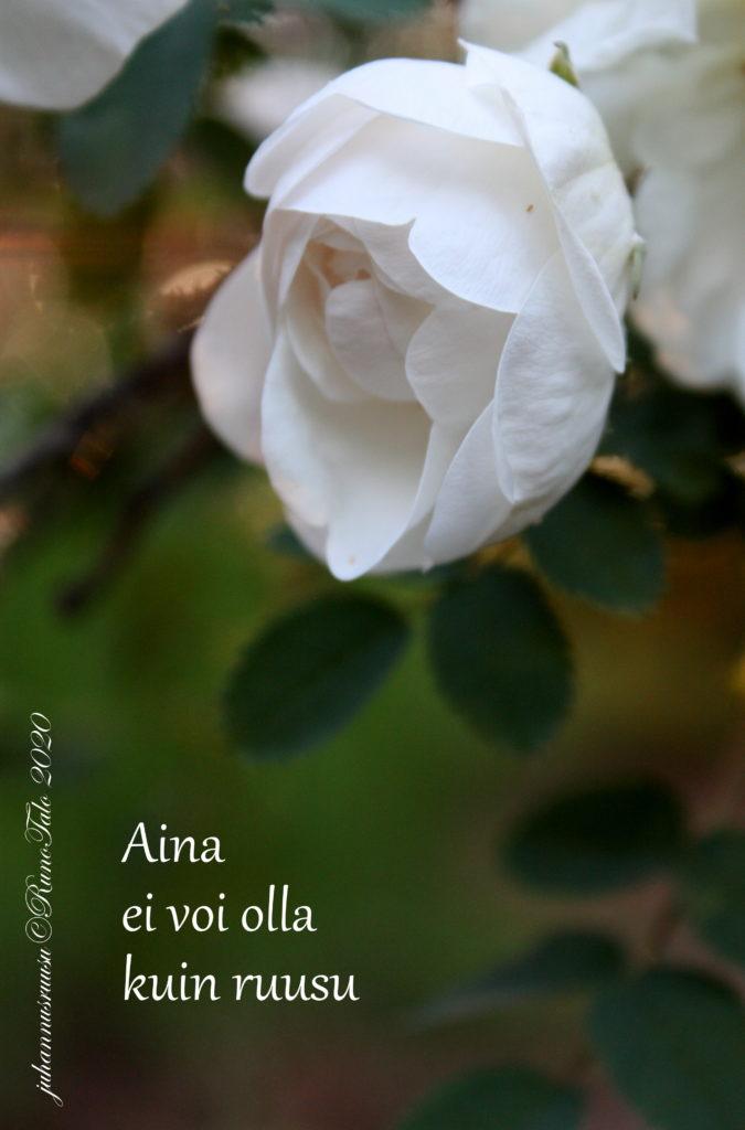 voimakortti Aina ei voi olla kuin ruusu
