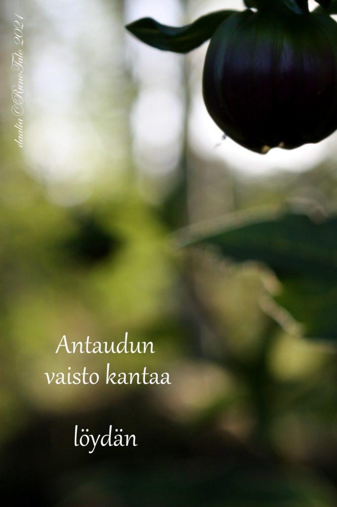 voimakortti Antaudun vaisto kantaa löydän