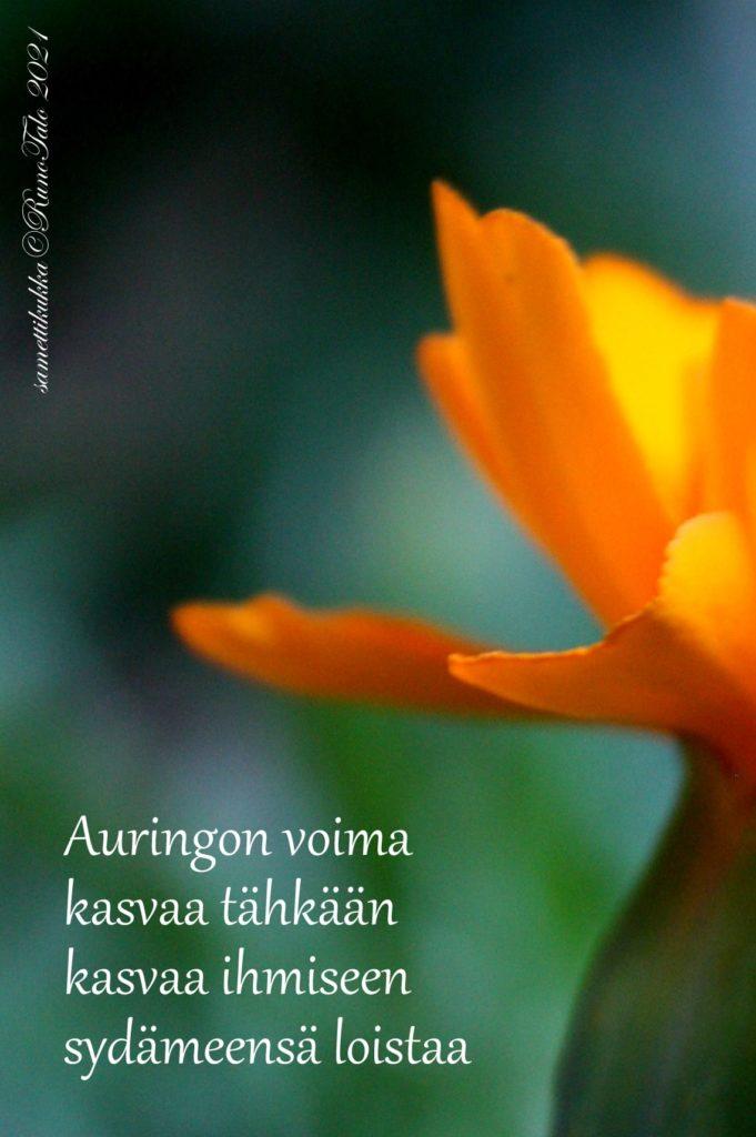 voimakortti Auringon voima kasvaa tähkään kasvaa ihmiseen sydämeensä loistaa