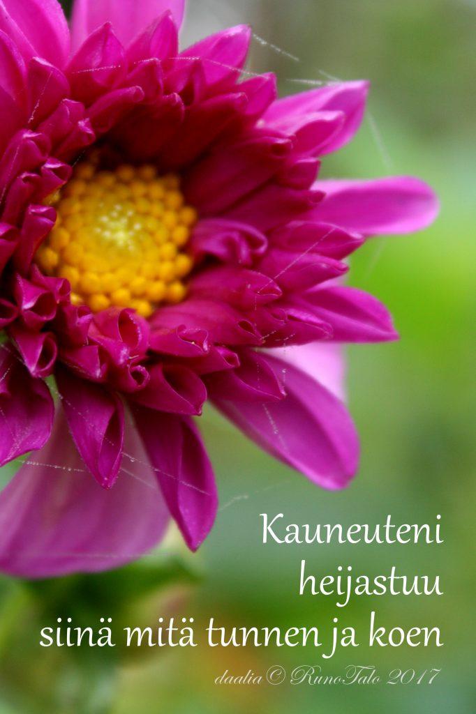 voimakortti Kauneuteni heijastuu siinä mitä tunnen ja koen
