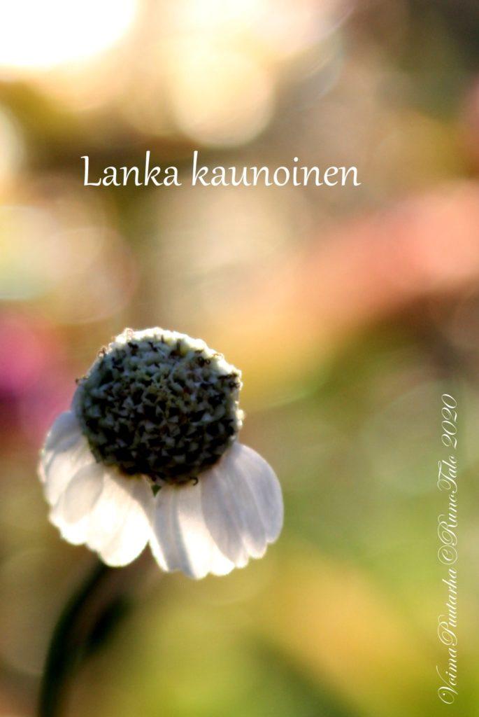Lanka kaunoinen Voimaruno ja voimakortit vk 46