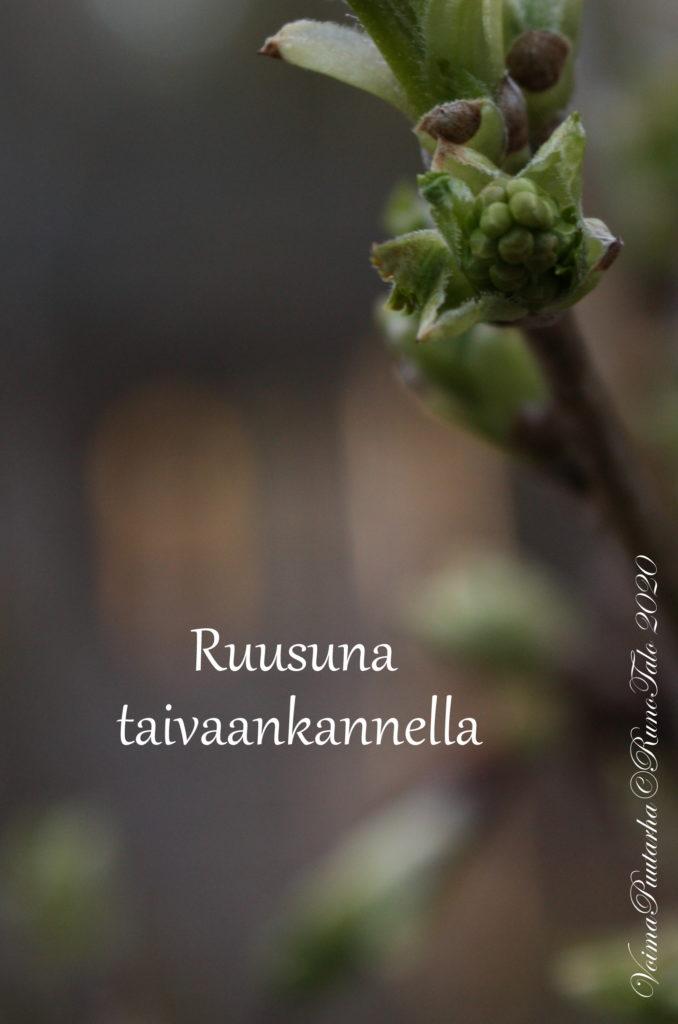 Ruusuna taivaankannella Voimaruno ja voimakortit vk 12