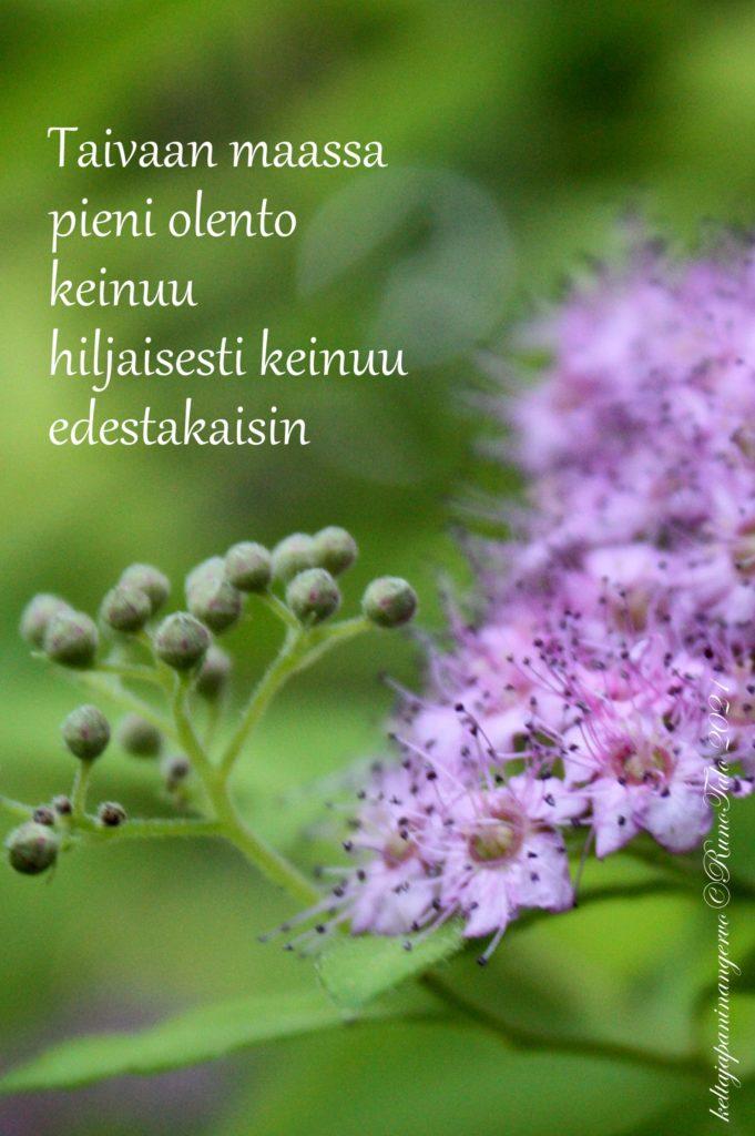 voimakortti Taivaan maassa pieni olento keinuu hiljaisesti keinuu edestakaisin