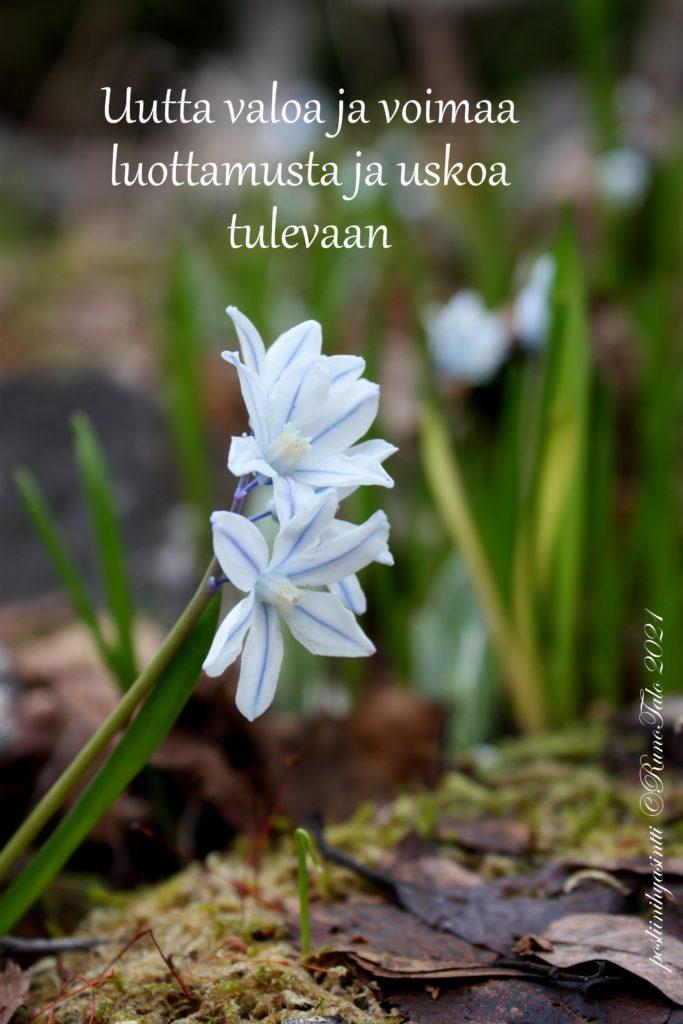 voimakortti Uutta valoa ja voimaa luottamusta ja uskoa tulevaan