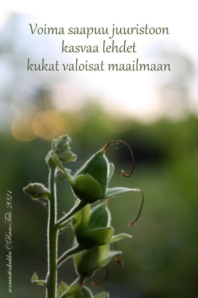 voimakortti Voima saapuu juuristoon kasvaa lehdet kukat valoisat maailmaan